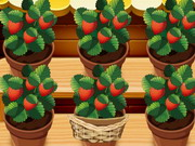 Mia Strawberry Garden Game