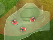 King Of The Beetles Game
